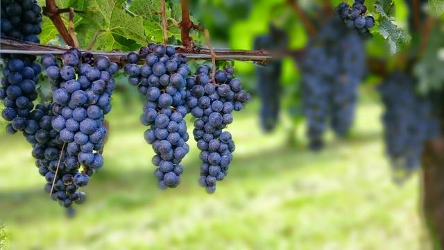 日本ワインが好きになるおすすめの銘柄4種