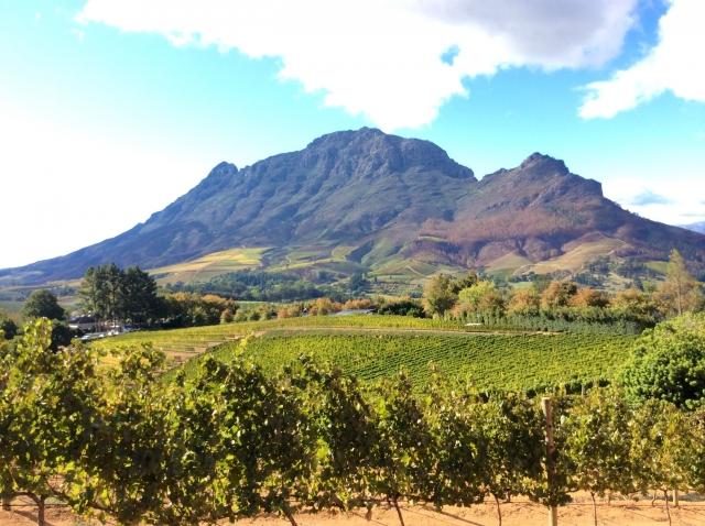 南アフリカワインが好きになるおすすめの銘柄4種