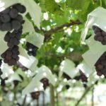 山梨ワインのおすすめ銘柄5種