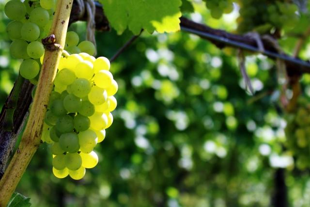 シャルドネ種の白ワインのおすすめ銘柄5種