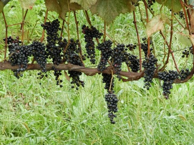 カベルネ・ソーヴィニヨン種の赤ワインのおすすめ銘柄5種