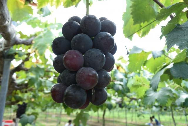 シラー種の赤ワインのおすすめ銘柄5種