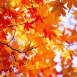 秋の味覚をつかったお酒のおすすめ銘柄7種